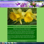 Daffodils 1 Column Layout